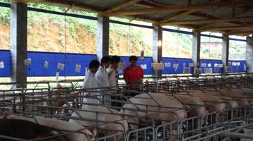 上海畜牧兽医有限公司